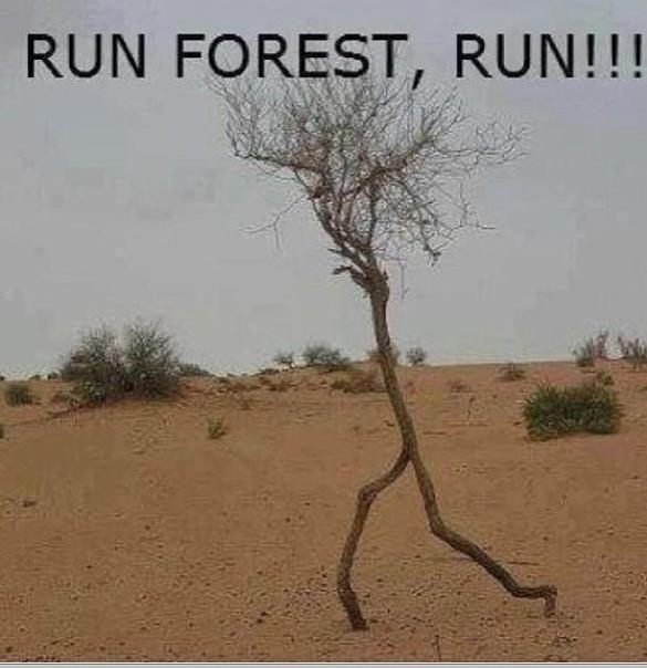Run Forest 2